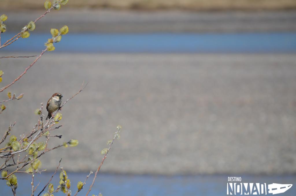 aves en Piedrabuena