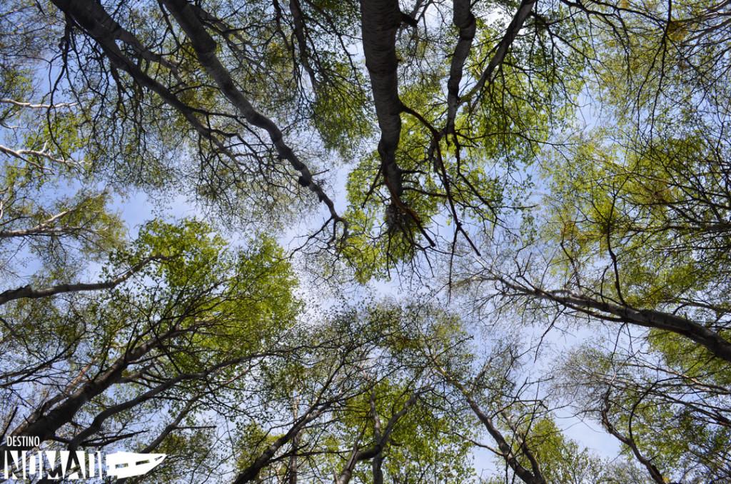 ushuaia-bosque