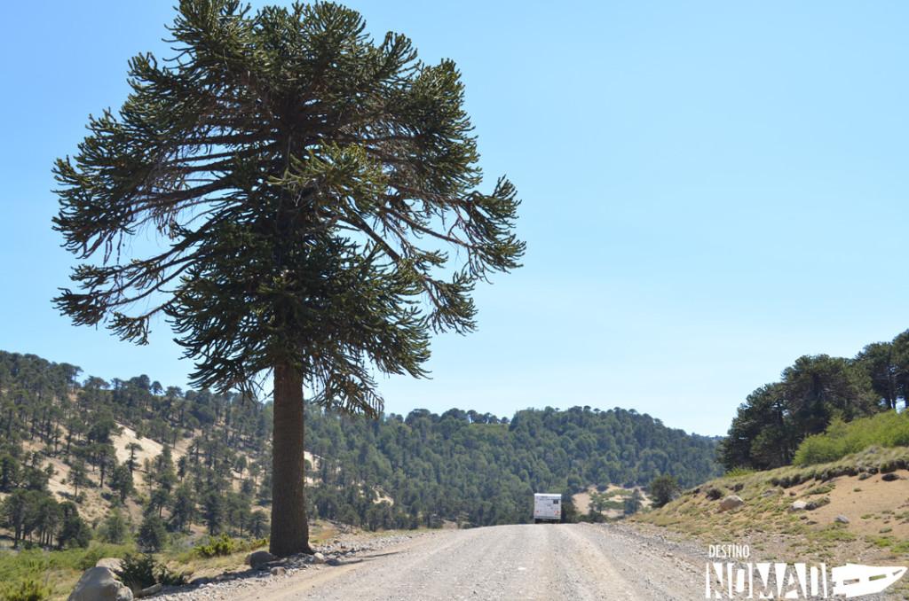 De Villa Pehuenia a Pino Hachado, rutas patagónicas