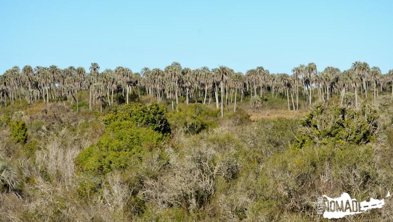 Vista de los palmares, PN El Palmar, Entre Ríos