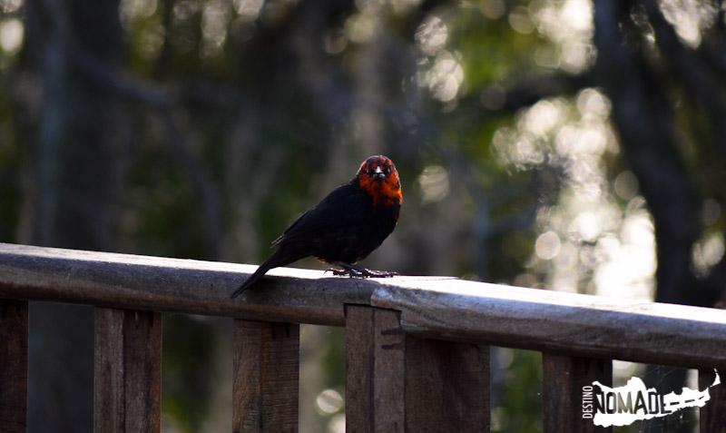 Aves, Esteros del Iberá