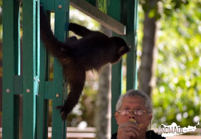 Fauna del PN Iguazú