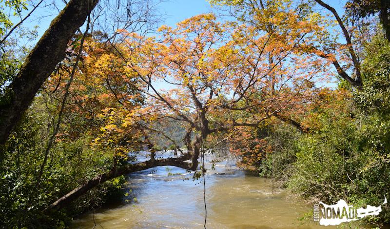 Naturaleza en el PN Iguazú