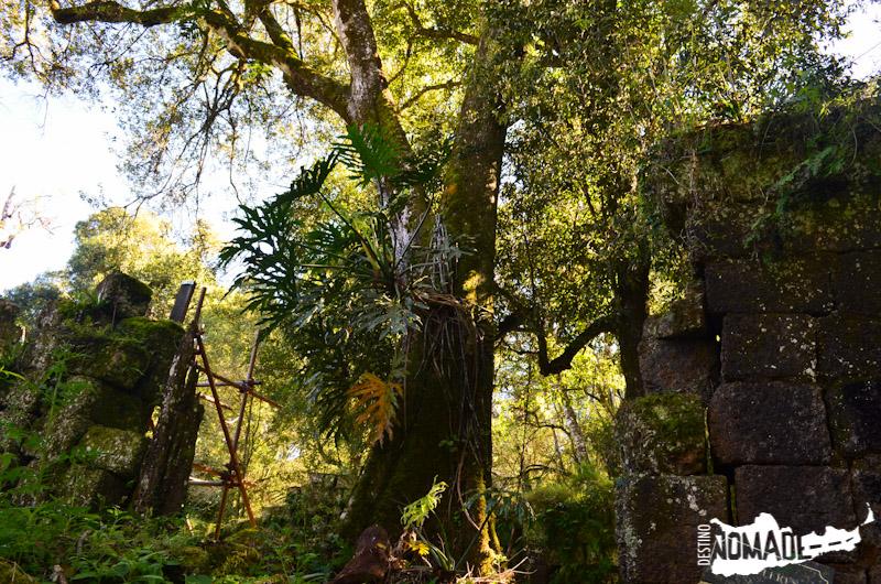 La selva avanza entre las ruinas de la misión de Santa María La Mayor.