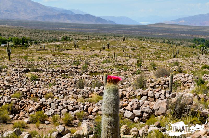Andenes de cultivo en Coctaca, Quebrada de Humahuaca