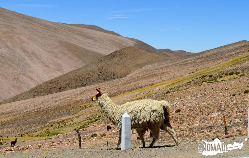 Cuesta de Lipán, Quebrada de Humahuaca